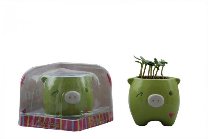 Piggy Plant;garden craft,home decoration(green)