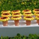 Garden gift;Flower water monitor