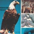 Boy's Life Magazine Vintage Back Issue November 1970 Endangered Species