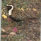 Vintage Audubon Magazine July 1976 Back Issue
