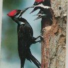 Vintage Audubon Magazine March 1970 Back Issue
