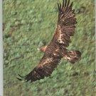 Vintage Audubon Magazine July 1977 Back Issue