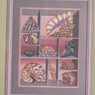 Candamar Something Special Shell Box Needlepoint Kit 30541 In Package