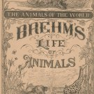 Vintage Brehm's Life Of Animals Part 23 A. N. Marquis Publishers Animals Of The World Not PDF