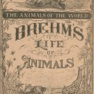 Vintage Brehm's Life Of Animals Part 16 A. N. Marquis Publishers Animals Of The World Not PDF