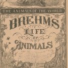 Vintage Brehm's Life Of Animals Part 13 A. N. Marquis Publishers Animals Of The World Not PDF