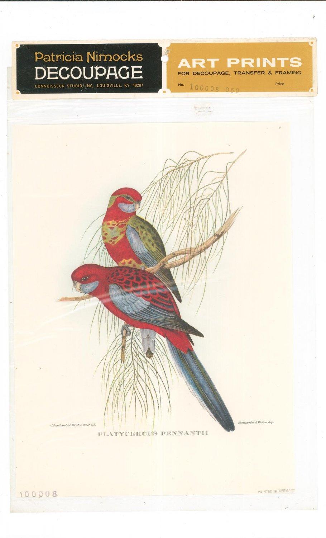 Patricia Nimocks Decoupage Art Print Bird 100008-050