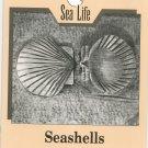 Seashells Carving Sea Life Buyer & Towers 0811724697