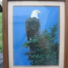 Vintage Bald Eagle Photo Print Glassed Framed Patriotic