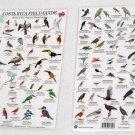 BIRDS OF COSTA RICA Field Guides Laminate 8 x 12 rigid cards.