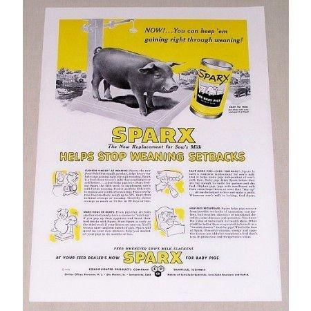 1951 Sparx Baby Pig Animal Food Pig Art Color Print Ad