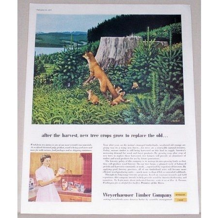 1957 Weyerhaeuser Timber Company Galli Art Color Print Ad