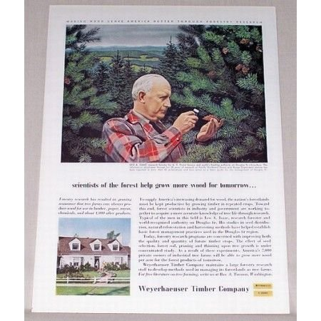 1955 Weyerhaeuser Timber Company Pine Trees Color Print Ad