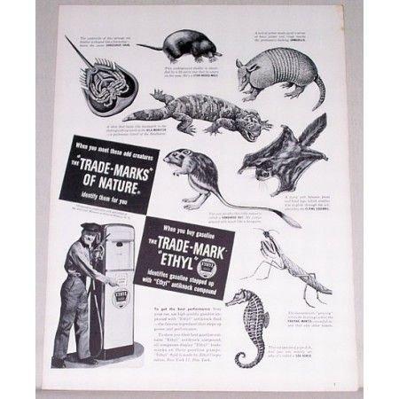 1948 Ethyl Trade-Marks of Nature Animal Art Vintage Print Ad