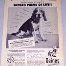 1954 Gaines Dog Meal Dog Food Vintage Print Ad