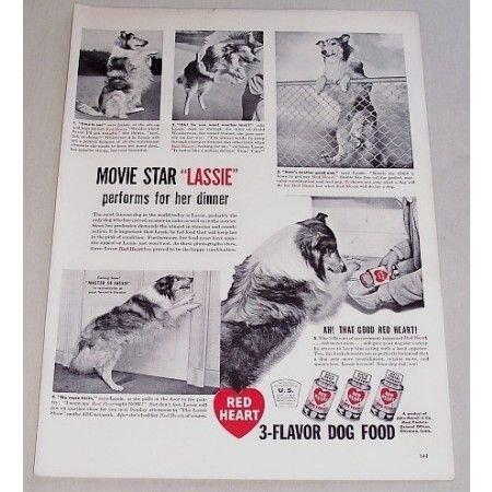 1948 Red Heart Dog Food Vintage Print Ad Celebrity Dog Lassie