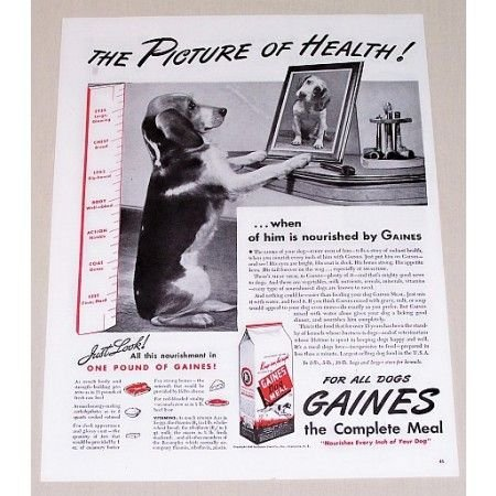 1945 Gaines Dog Meal Vintage Print Ad - The Picture Of Health