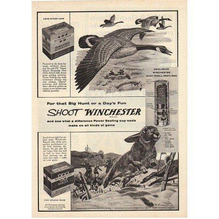 1955 Winchester Shotgun Shells Hunting Fowl Rabbit Art Vintage Print Ad