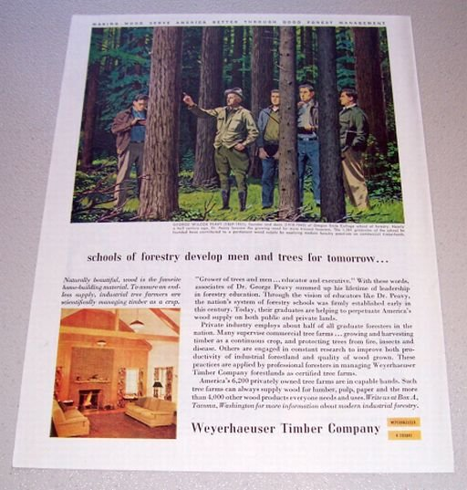 1955 Weyerhaeuser Timber Comany Color Art Print Ad George Peavy