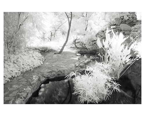 """Enlightenment #8"" Austin Texas Fantasy Infrared Garden Landscape Fine Art Photo Zilker Park Austin"