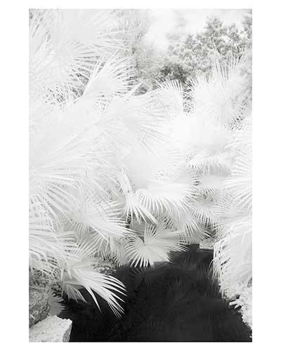 """Radiance #12"" Austin Texas Zilker Park Texas Garden Landscape Fine Art Photo Infrared"