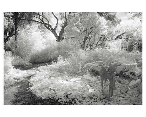 """The Path #4"" Fantasy Austin Texas Zilker Park Infrared Landscape Garden Fine Art Photo"