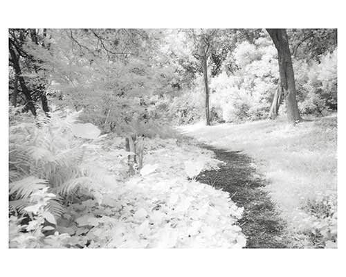 """The Path #5"" Fantasy Landscape Austin Infrared Garden Fine Art Photo Austin Texas Botanical Burgess"