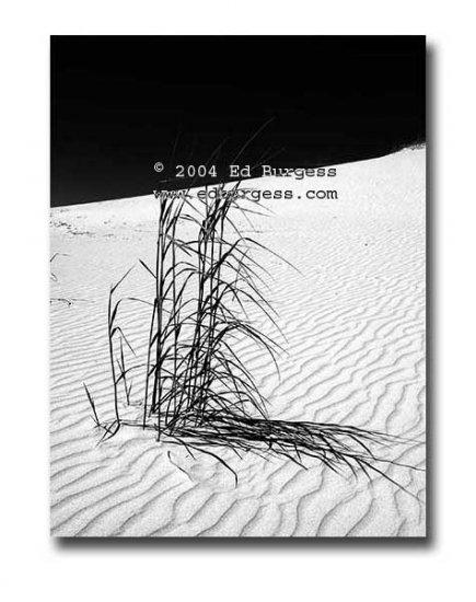 """Desert Grass "" Monahans Sandhills Fantasy Landscape Fine Art Photo"