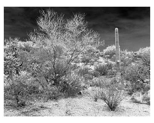 """Saguaro National Park #3"" Saguaro National Park Landscape Fine Art Print Fantasy"