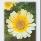 #M4U0144 Yellow Flower Miss You Greeting Card