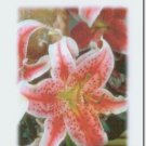 #M4U0244 Floral Flower Thank You Greeting Card