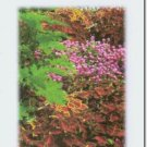 #M4U0248 Flower Garden Thank You Greeting Card