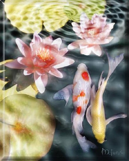 KOI WITH YELLOW LILY  PADS