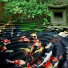 KOI IN ASIAN GARDEN