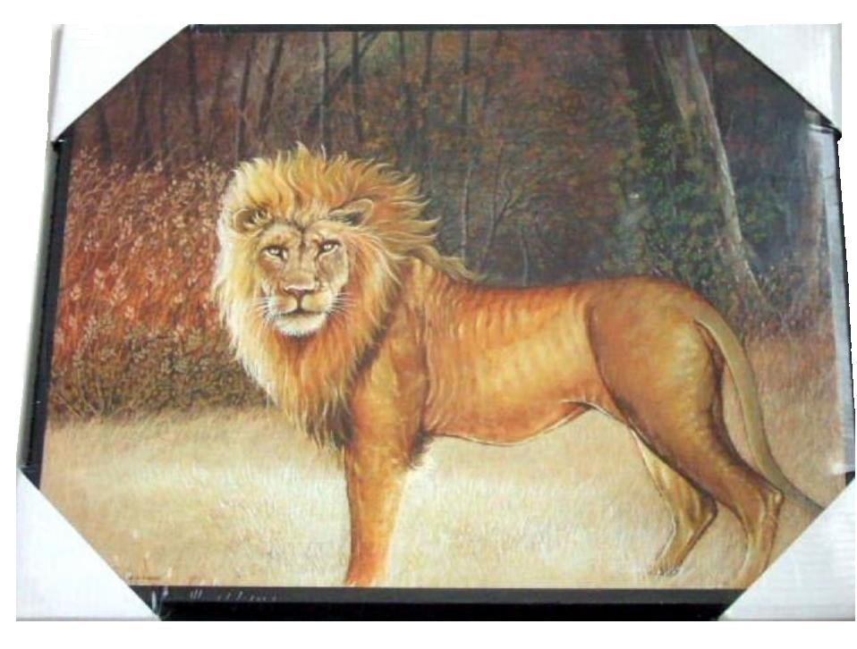 African Lion Plaque Picture Wall Decor