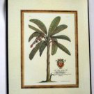 Banana Palm Tree Plaque Wall Decor