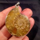 925 Silver Ammonite Sea Fossil Pendant Dinosaur Era A