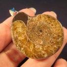 925 Silver pendant ancient sea ammonite fossil A