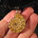 925 Silver Africa Ammonite Fossil Pendant Necklace Thailand jewelry art A4