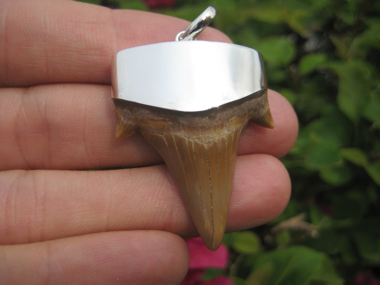 925 Silver Otodus Obliquus Fossilized shark tooth pendant necklace A8