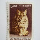 Indian Postage Stamp with a leopard cat on it