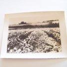 Vintage pineapple fields Honolulu Hawaii photograph black white photo