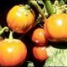 Eggplant Seeds - Turkish Orange - Heirloom