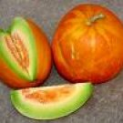 Thai Golden Round Melon - VERY Rare!