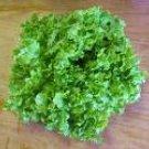 Green Salad Bowl Lettuce