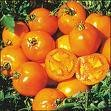 Sunray Tomato
