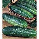 Straight 8 Cucumber