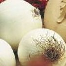 Sweet White Spanish Onion