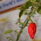 Bhut Jolokia Hot Pepper-Hottest Pepper In The World!