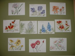 WILDFLOWER NOTECARDS  by Maren Phillips